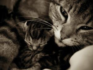 Mamma_baby